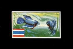1962 DICKSON ORDE #18 SPORTS OF THE COUNTRIES SIAM