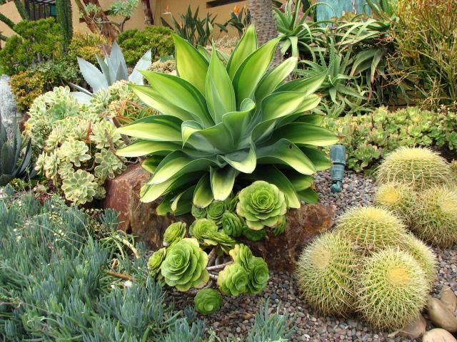 Landscape Plants Ideas