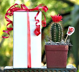 Decorated cactus in ribbon-tied white gift box