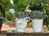 20 Baby Shower Succulent Plants in White Bucket