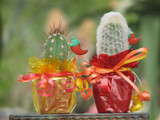 20 Decorated Mexican Fiesta Mini Cactus Plants