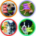 Set of 12 Happy Happee Fun Dogs Pulpboard Coaster Set