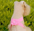 Le Fiore Extra Small Pink Ultrasuede Velcro Harness with one Flower