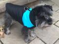 Aqua Blue and Black Nylon Waterproof Color Block Quilted Dog Vest Coat