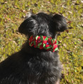 "Red & Green Fantasy Flowers Ultrasuede 1/2"" Dog Christmas Collar w/ Swarovski Crystals"