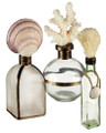 Set of 3 Assorted Glass Bottles with Elegant Shell & Coral Accents