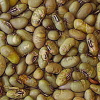 Soy Beans, Edamame