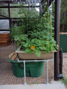 Small Patio System Aquaponics