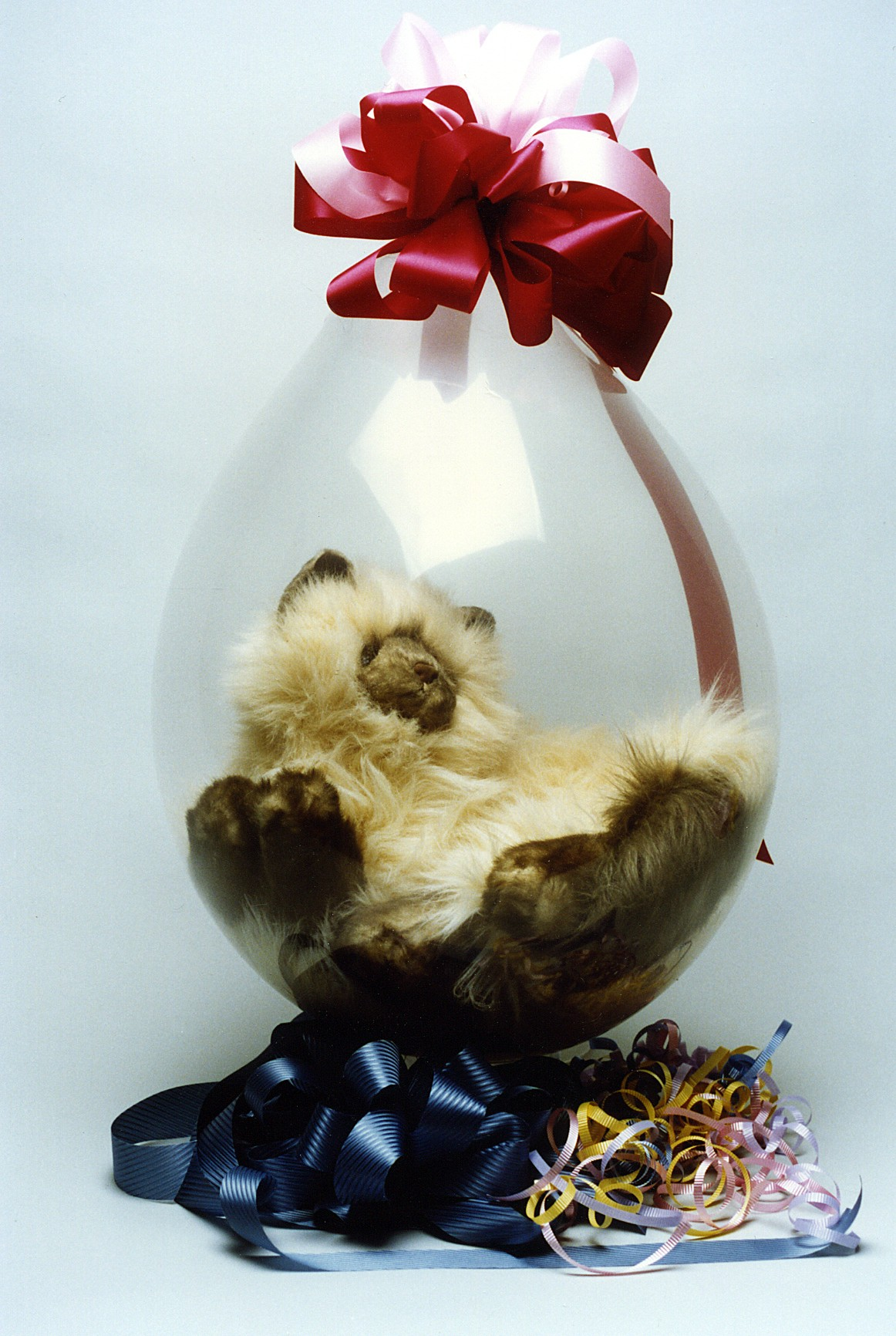 18-inch-qualate-stuffing-balloon-cat.jpg