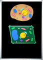 Cell Science Interactive Presentation Set