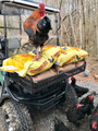 """THE 18"""" FRONT BASKET WITH 200LBS OF CHICKEN FEED!  And a 13 lb  Ben, the Jersey Giant rooster"""