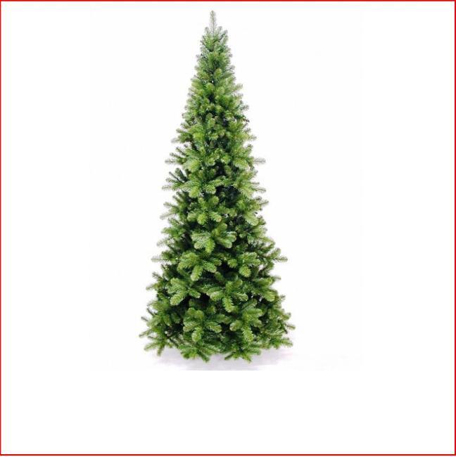 Australian Christmas Tree Pine.Pencil Pine 1 37m