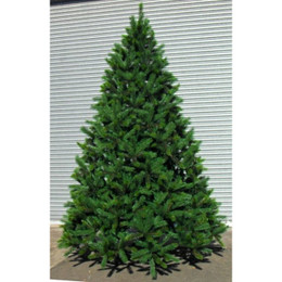 Oslo Spruce 14ft