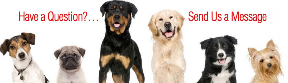 dogshaveaquestion.jpg