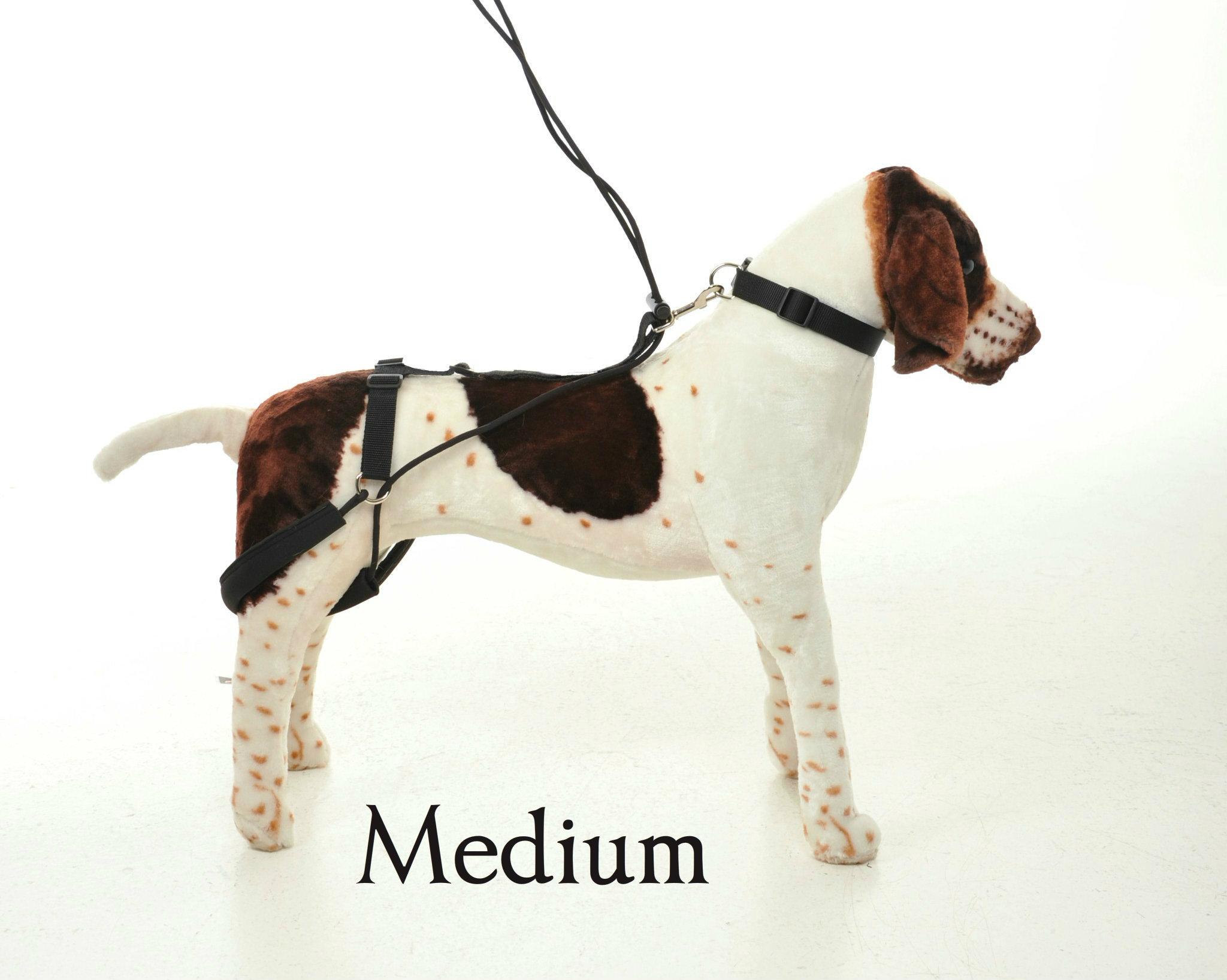 medium-model.jpg