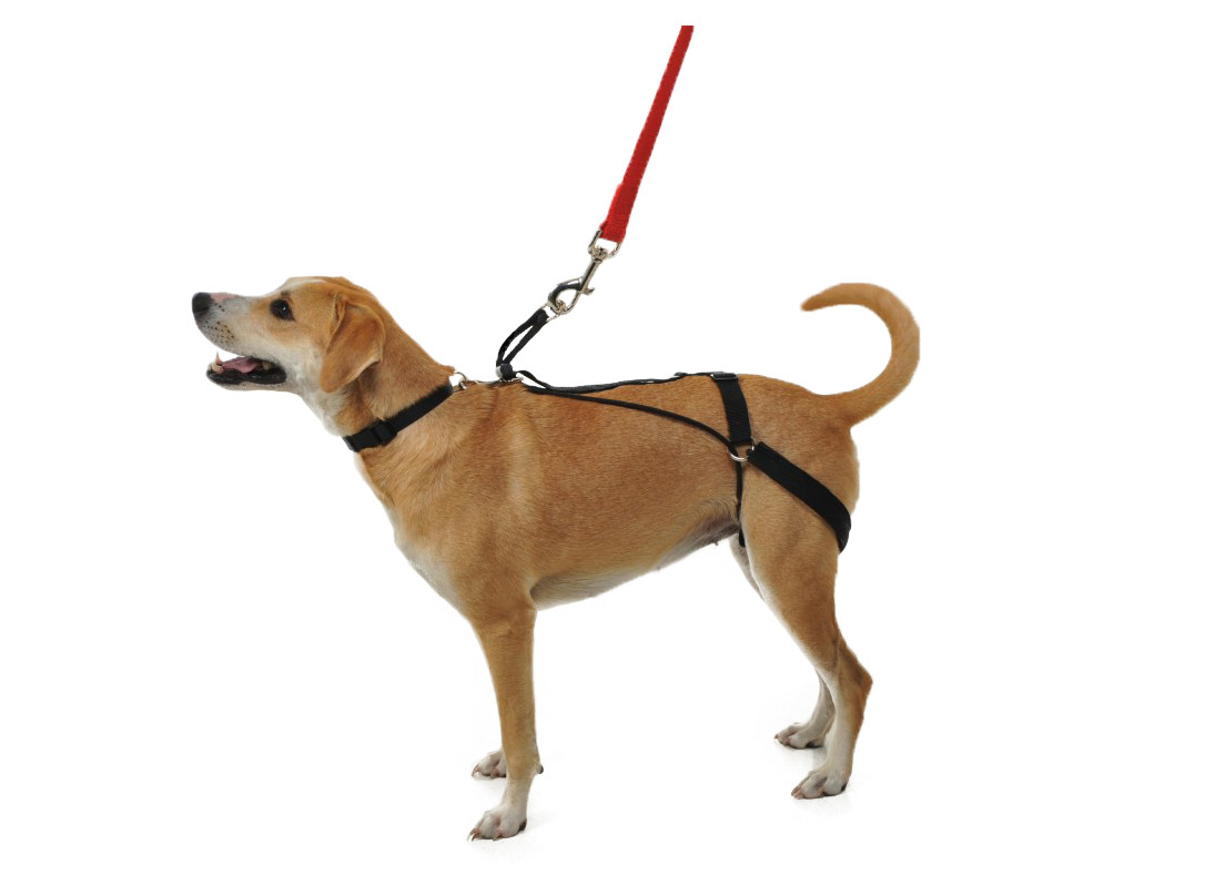 The Horgan Harness: a no pull dog harness