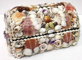 Assorted Shell Treasure Box