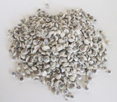 Pearl Umbonium Button Top Seashells - 1 Kilo