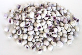Violacea White and Purple Seashells - 1 Pound