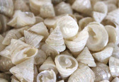 Pearlized Among Pong Seashells - 1 Pound