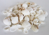 White Arca Seashells - 1 Pound