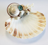 Banded Turbo Petholatus Scallop Shell soap dish