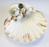 Scallop Shell Soap Dish with Pearl Turbo