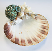 Scallop soap dish with Green Turbo shell