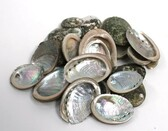 Baby Abalone Shells - 1 Pound