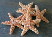 small sugar starfish assortment