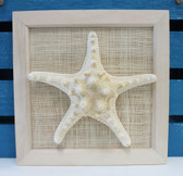 Framed White Bumpy Starfish