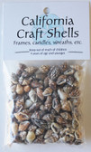 Natural Nassa Shell Craft Bag