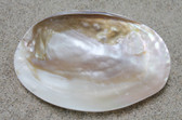 Small Oyster Soap Dish