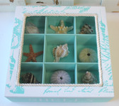 Sea shell display box filled with shells, starfish & sea urchin.