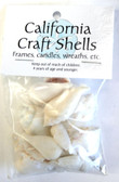 White Strombus Craft Shells