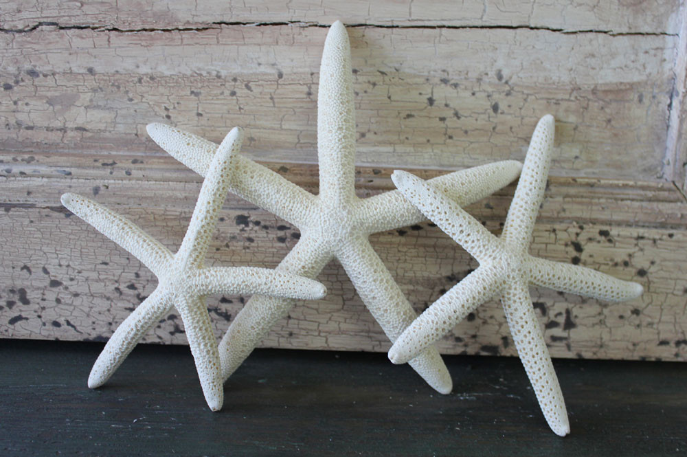 Small White Finger Starfish
