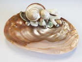 Dark Oyster Shell Soap Dish with Turbo Petholatus