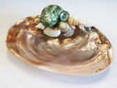Oyster Shell Soap Dish with Green Turbo