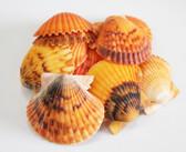 Orange Calico Pectins