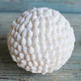 Small White Nassa Ball
