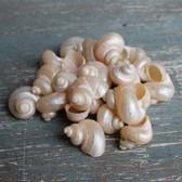 Small Pearl Turbos