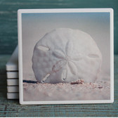Sand Dollar on the Beach Coaster