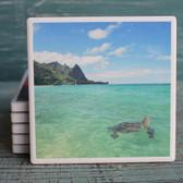 Sea Turtle Island Coaster
