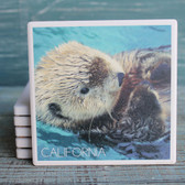 California Sea Otters Coaster