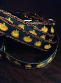 Pumpkin dog collar and leash