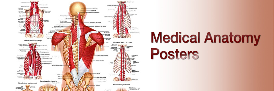 Anatomy Posters and Anatomical Models at ClinicalCharts.com