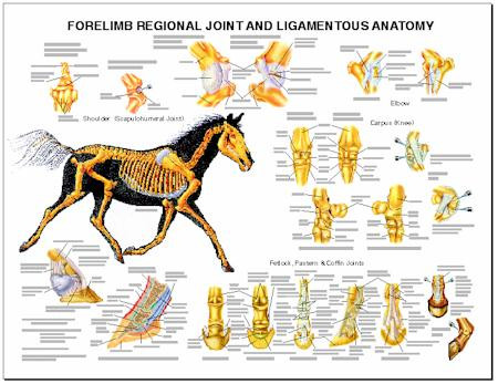 Veterinary Tools Charts Posters