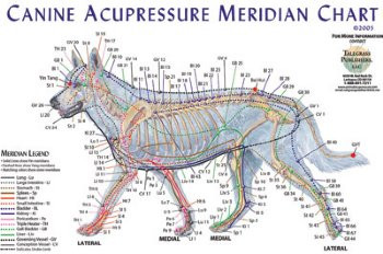 Dog Acupressure Chart