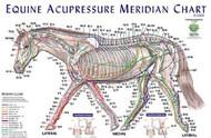 Horse Meridian Chart