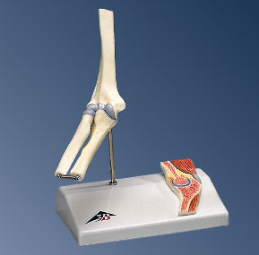 Elbow Joint, with cross section (Mini)